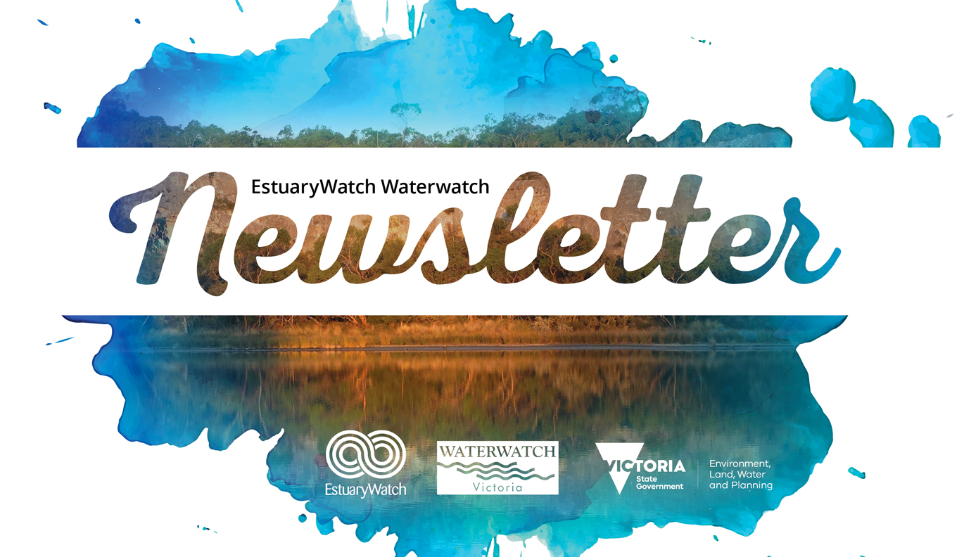 waterwatch newsletter
