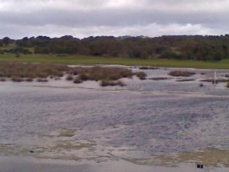 Spring Creek Estuary one day before being opened.