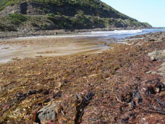 Large seaweed deposits after easterly weather pattern